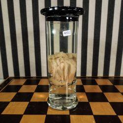 Vintage glaskolbe med spændende musling-sprit-dyr.