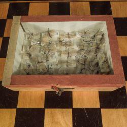"""Vintage æske med med """"pindede"""" små insekter"""